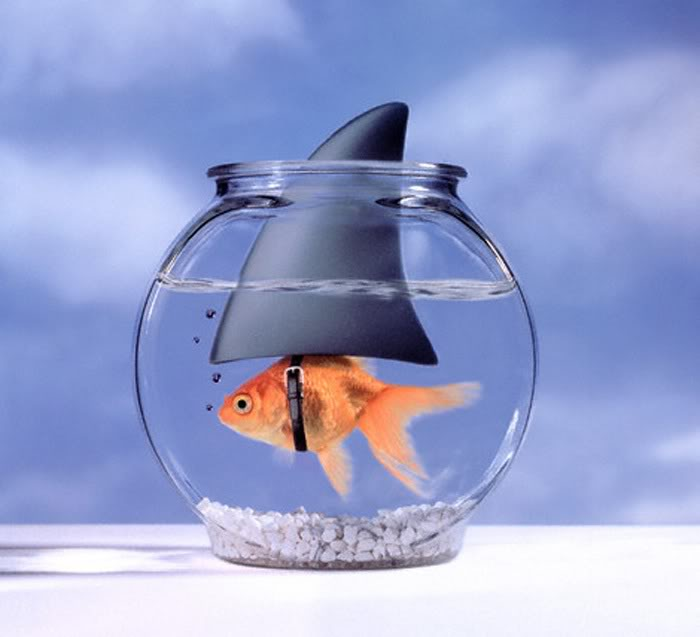 pesce-rosso-squalo